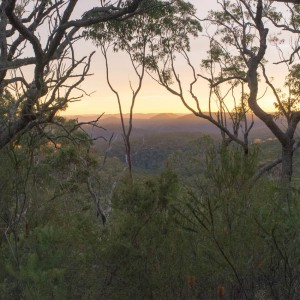 Sunrise over Berowra Valley NP