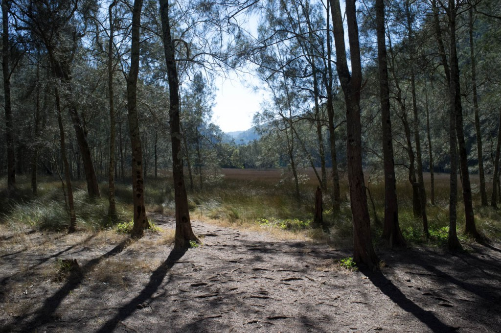Salt Marsh, Calna Creek, Berowra Valley NP