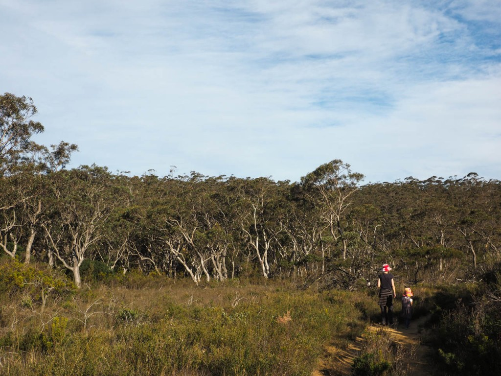 Kings Tableland Walk, Wentworth Falls NP