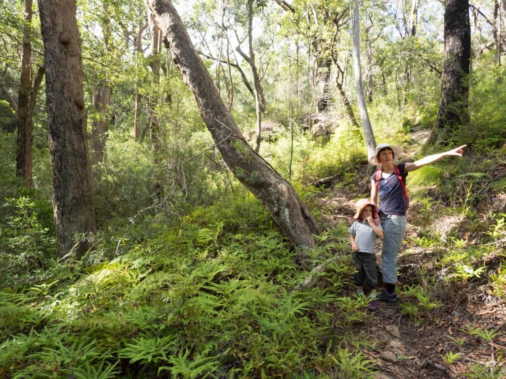 Wet sclerophyll forest, Morton NP