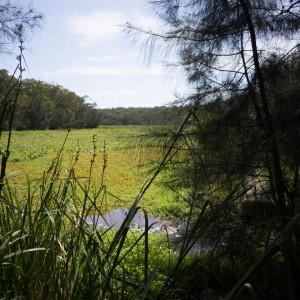 Yeramba Lagoon, Georges River NP