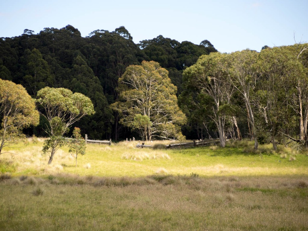 Old stock yards, Nunnock Swamp, South-East Forest National Park