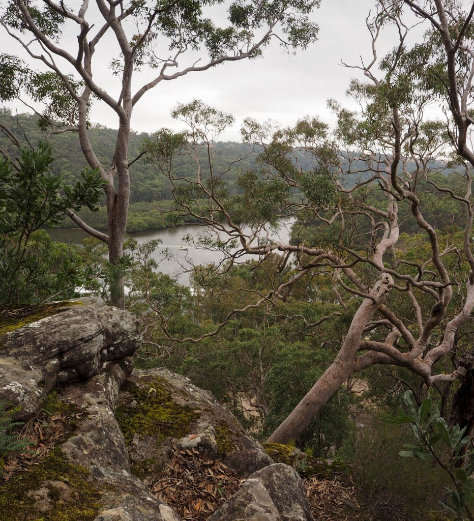 Angophoras line the escarpment overlooking the Georges River, Ridge Walk, Georges River NP
