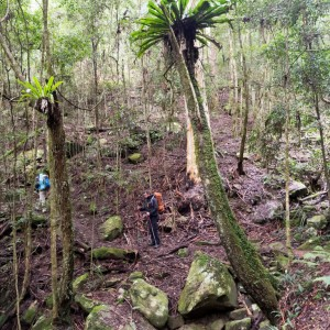 John and Cole negotiate the steep gully above Wollombi Brook, Olney State Forest