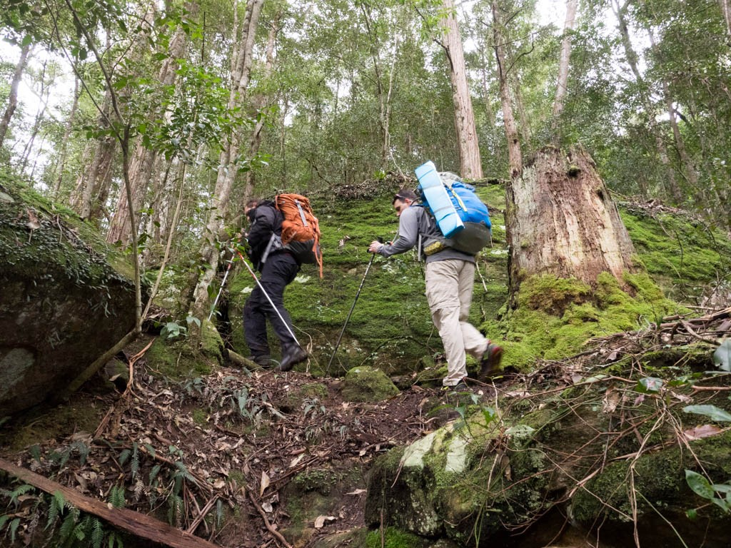Climbing out of the Wollombi Brook rainforest gully