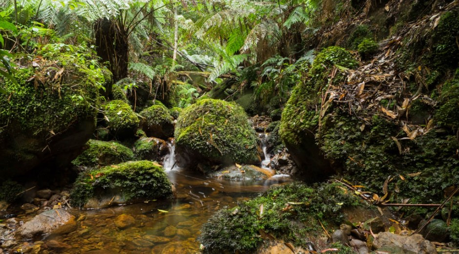 A lush creek gully before the ascent to the Hidden Valley campsite, Budawang Range, Morton NP, NSW