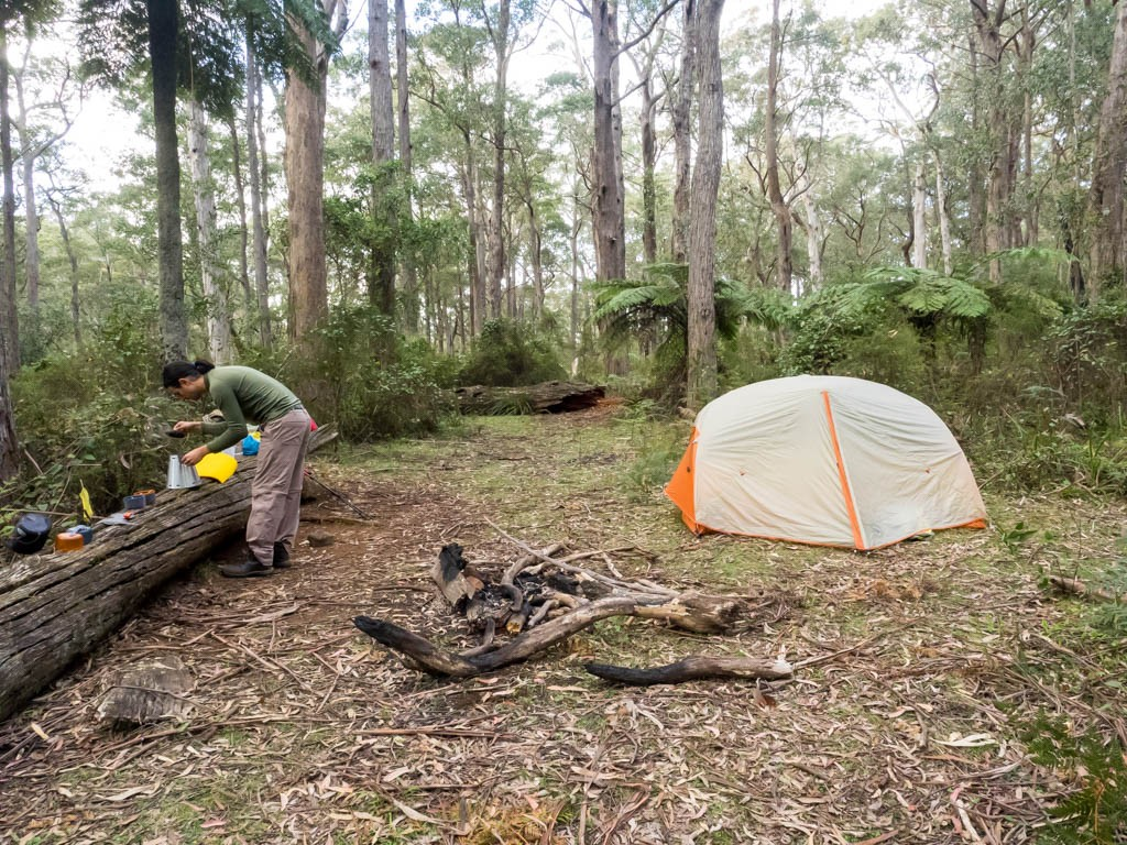 Deep in the forest: a clearing for a campsite at the Hidden Valley turnoff