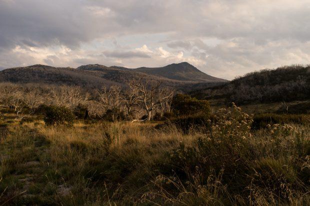 Mt Jagungal