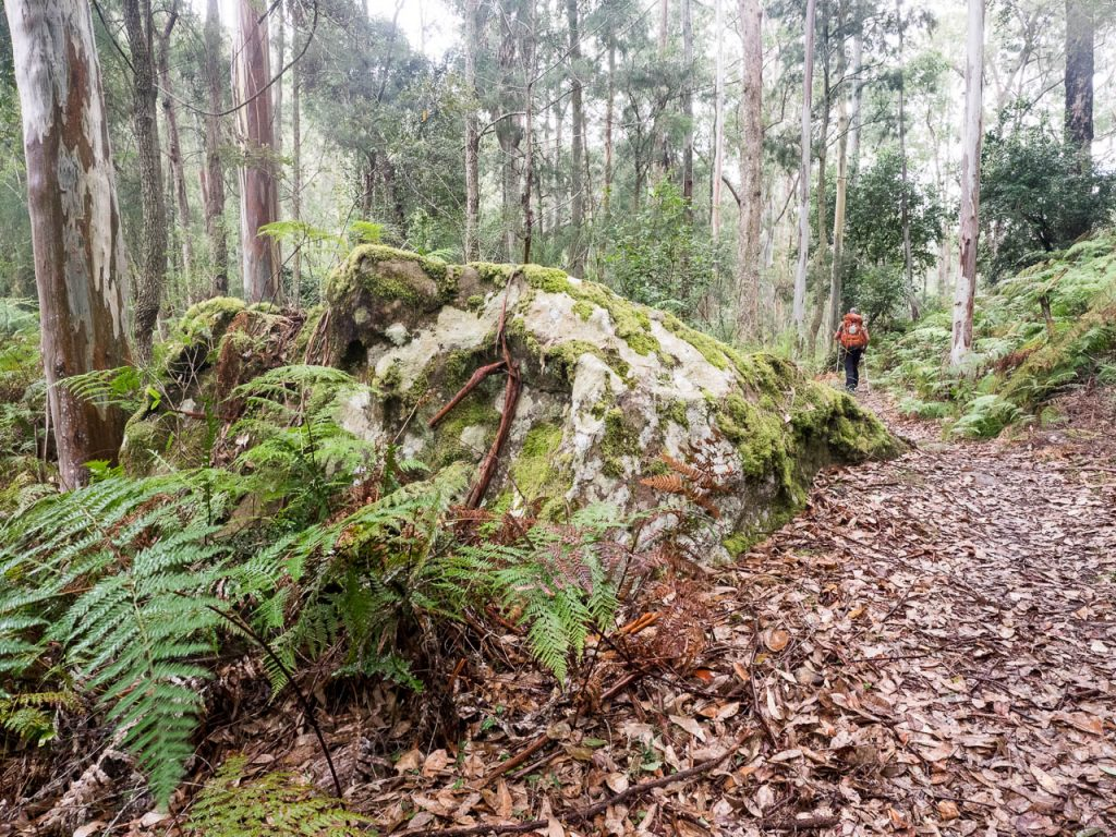 Mossy rock beside path